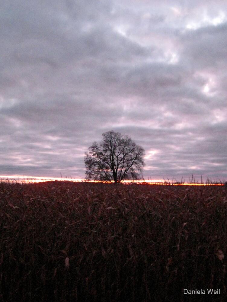 Autumn's Solitude by Daniela Weil