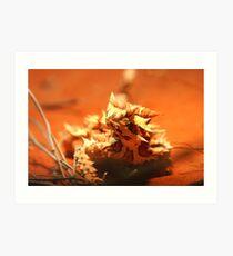 thorny devil (_Moloch horridus_) Art Print
