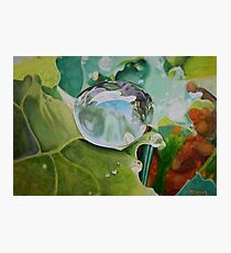 Dewdrop- Colored Pencil Photographic Print