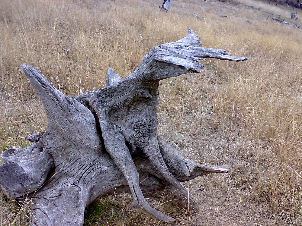 wierd wood close up by Mitch94