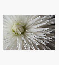Whiteness Photographic Print