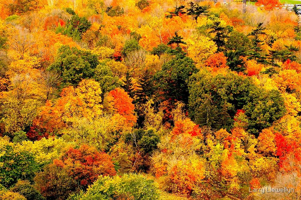 Trees Painted.....Falls Last Horah!!! by Larry Llewellyn
