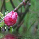 Pink Rosebud by Gilberte