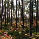 trees & shadows by dorka31
