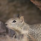 California Ground Squirrel by Buckwhite