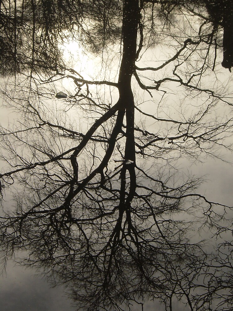 Winter Reflected by Talia Knight
