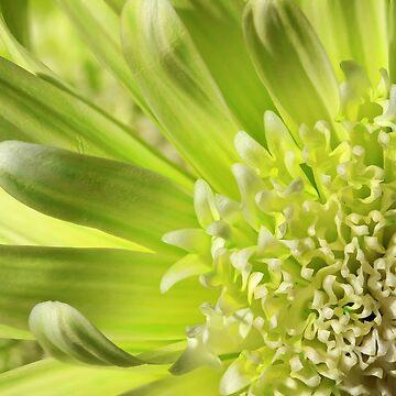 Green Daisy Macro by tenia115