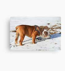 Sniffin in the Snow Metal Print