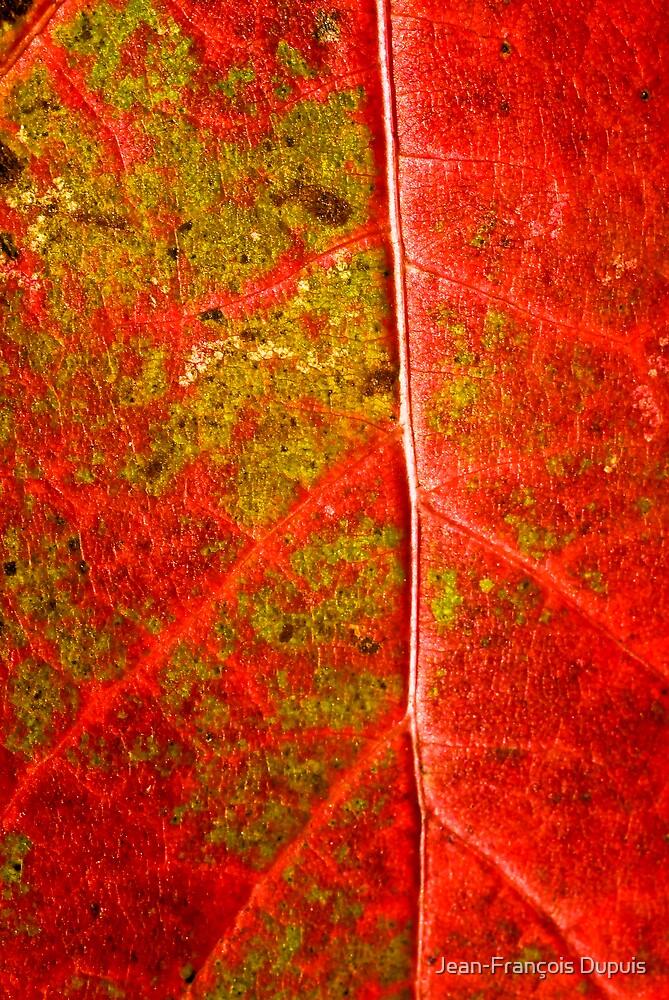 Texture leaf by Jean-François Dupuis
