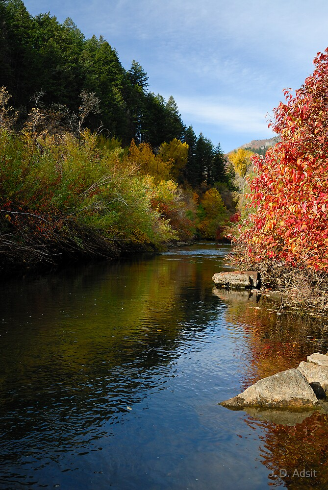 Resting Quietly as Autumn Floats Past by J. D. Adsit