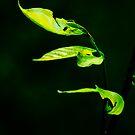 Green Streaks of Lights by T A Joseph