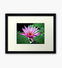 Water Lily... Framed Print