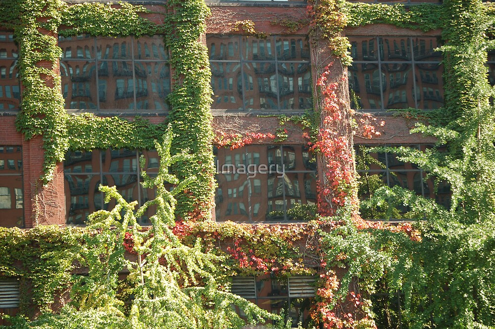 Window Vines by Imagery