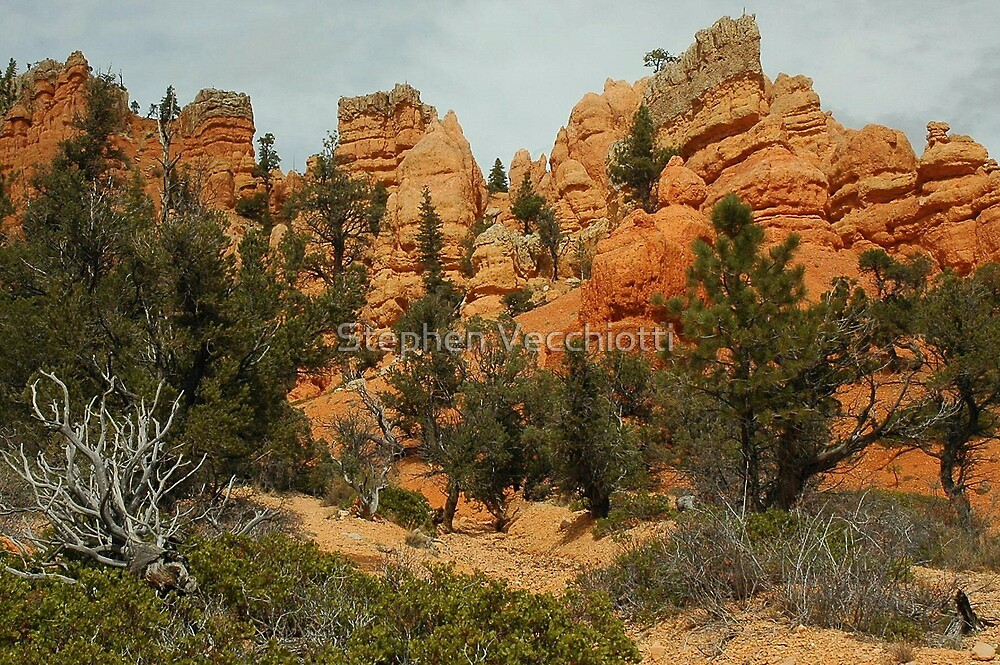 Red Canyon Morning by Stephen Vecchiotti