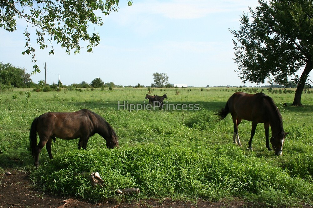 Horses by HippiePrincess