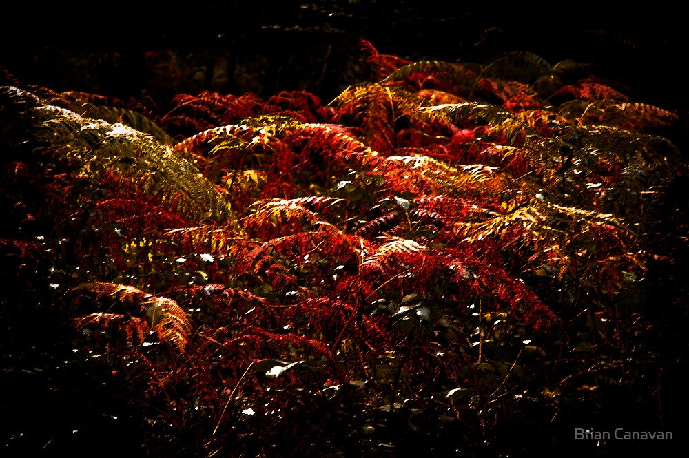 Golden Bracken  by Brian Canavan