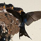 Home Delivery by Wildpix