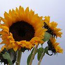 sunflowers by megga
