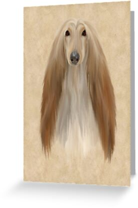 Afghan Hound by John Edwards