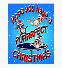 hope you have a purrrfect christmas Photographic Print
