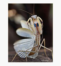 """ELEGANCE"" IN CAPTURE - The praying mantis Photographic Print"