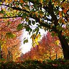 Autumn Avenue by Gilberte