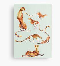 Cheetah poses Metal Print