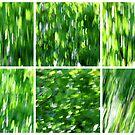 Birch in the Breeze by Kitsmumma