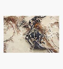 sea sculptures  Photographic Print