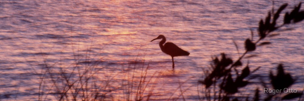 Heron at Sunset by Roger Otto