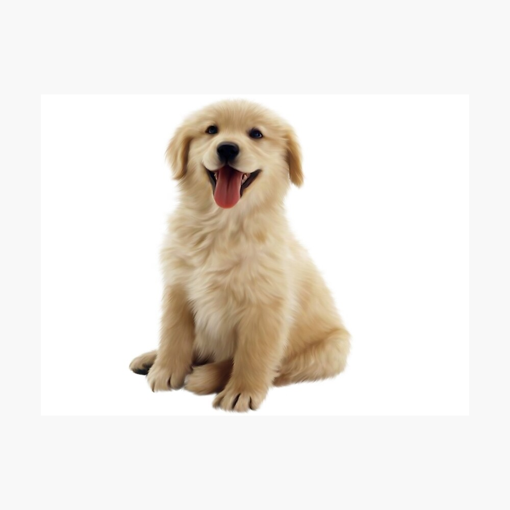 Golden Retriever Fotodruck