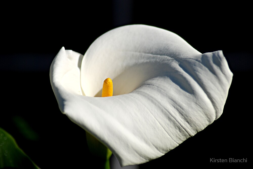Cala Lilly by Kirsten Bianchi