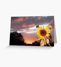 SUNFLOWER AND PINK SUMMER SUNSET Greeting Card