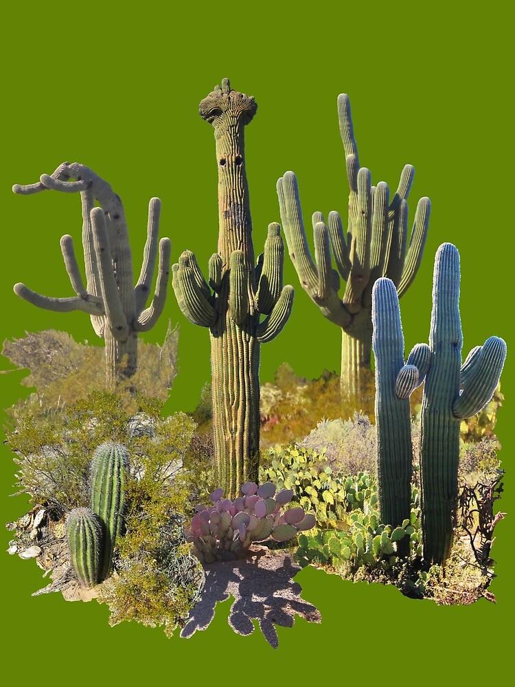 Giant Saguaros of the Sonoran Desert by James Lewis Hamilton