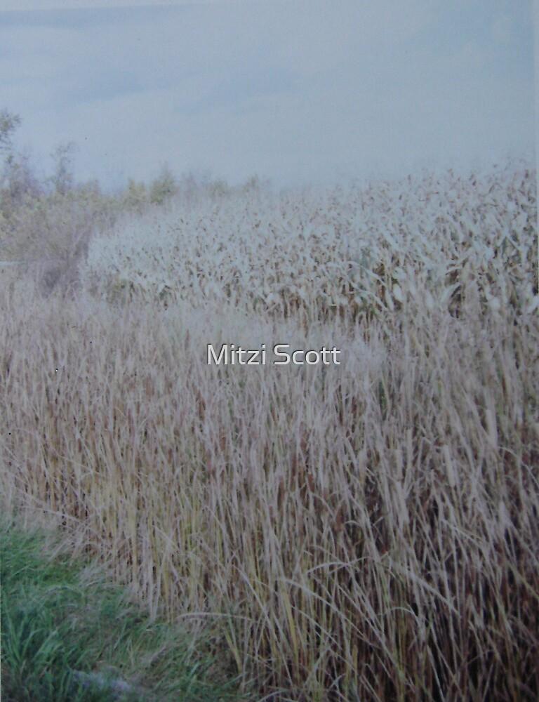 Harvest by Mitzi Scott