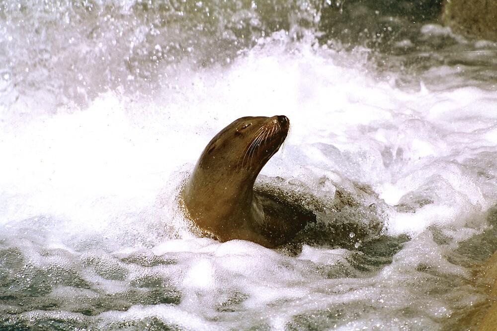 Surfacing by steveberlin