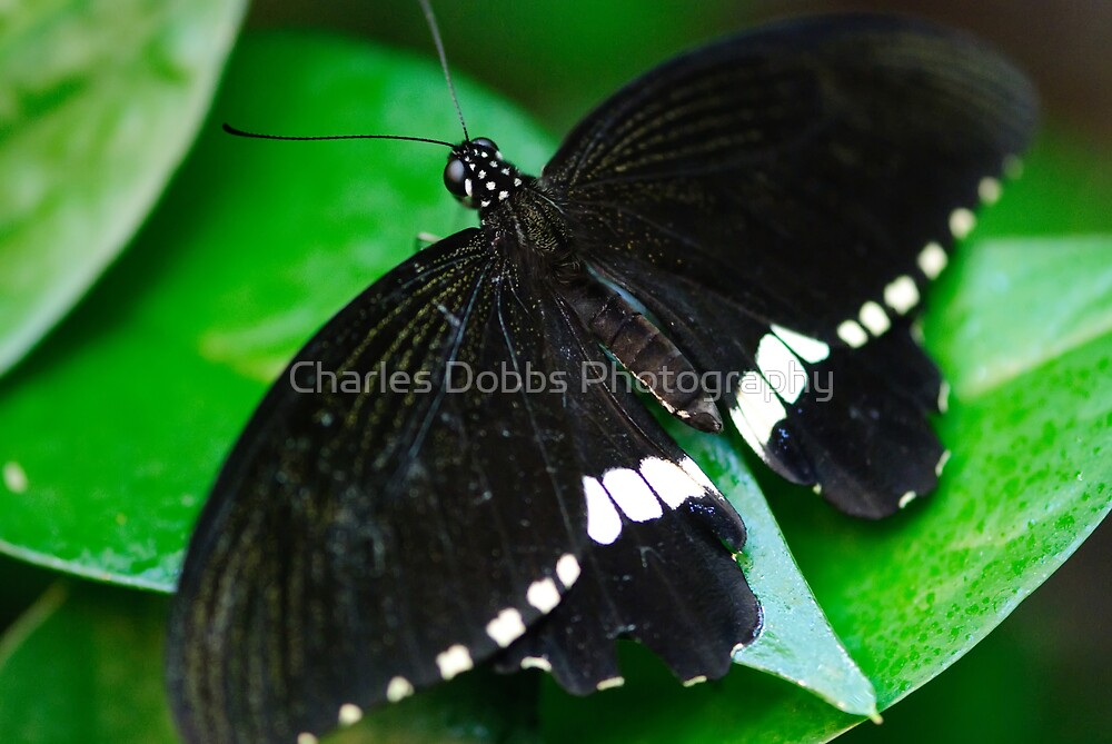 Imago by Charles Dobbs Photography