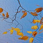Leaves and Branches by John Butler