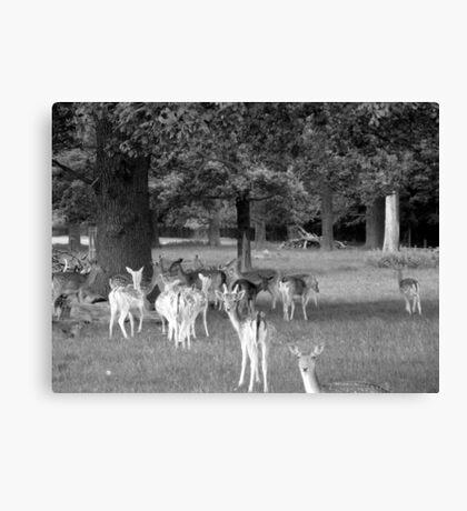 Richmond Park Deer Canvas Print