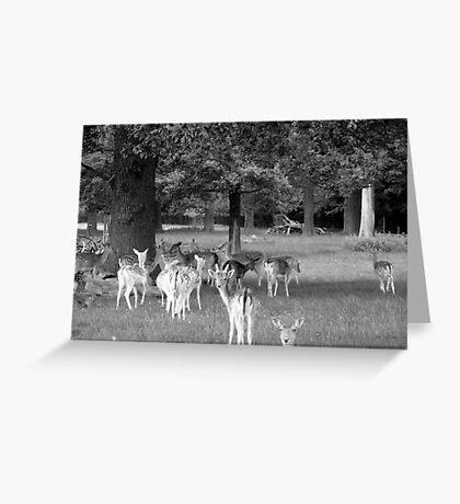Richmond Park Deer Greeting Card