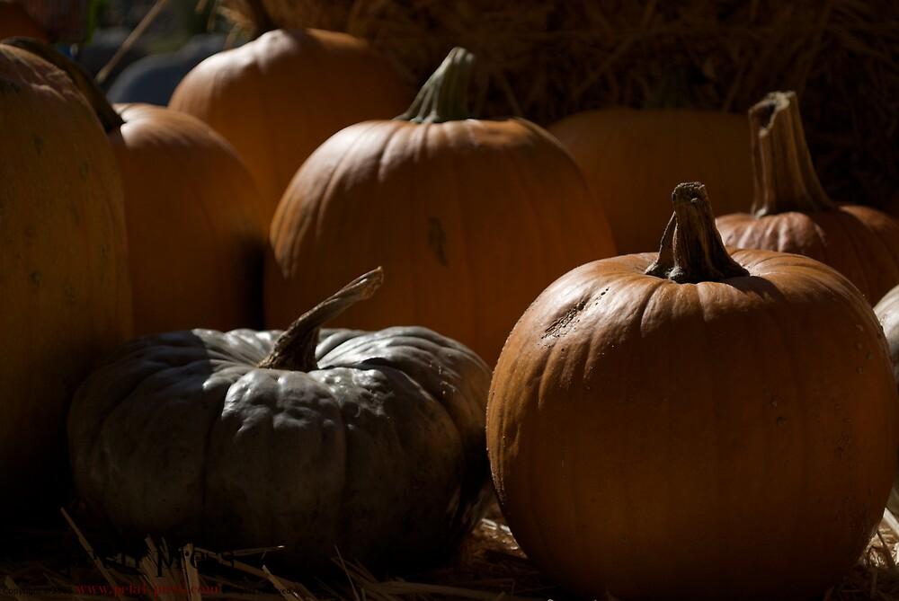 lit pumpkins by petalpress