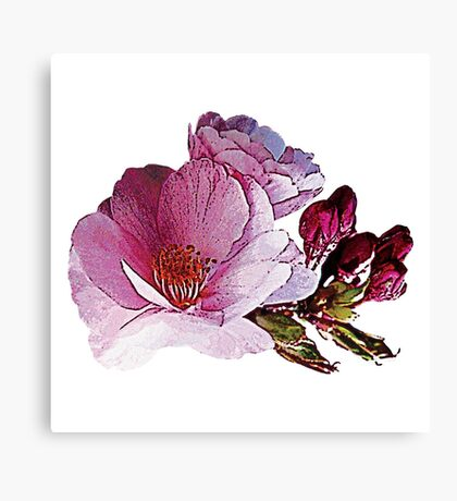 Cherry Blossom and Buds Canvas Print