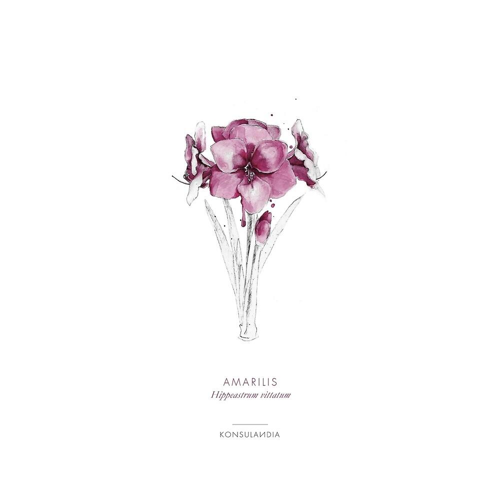 «Amarilis» de konsulandia