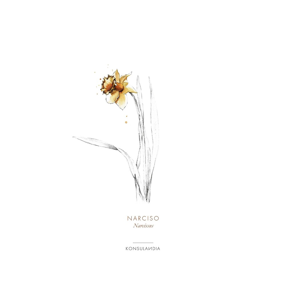«Narciso» de konsulandia
