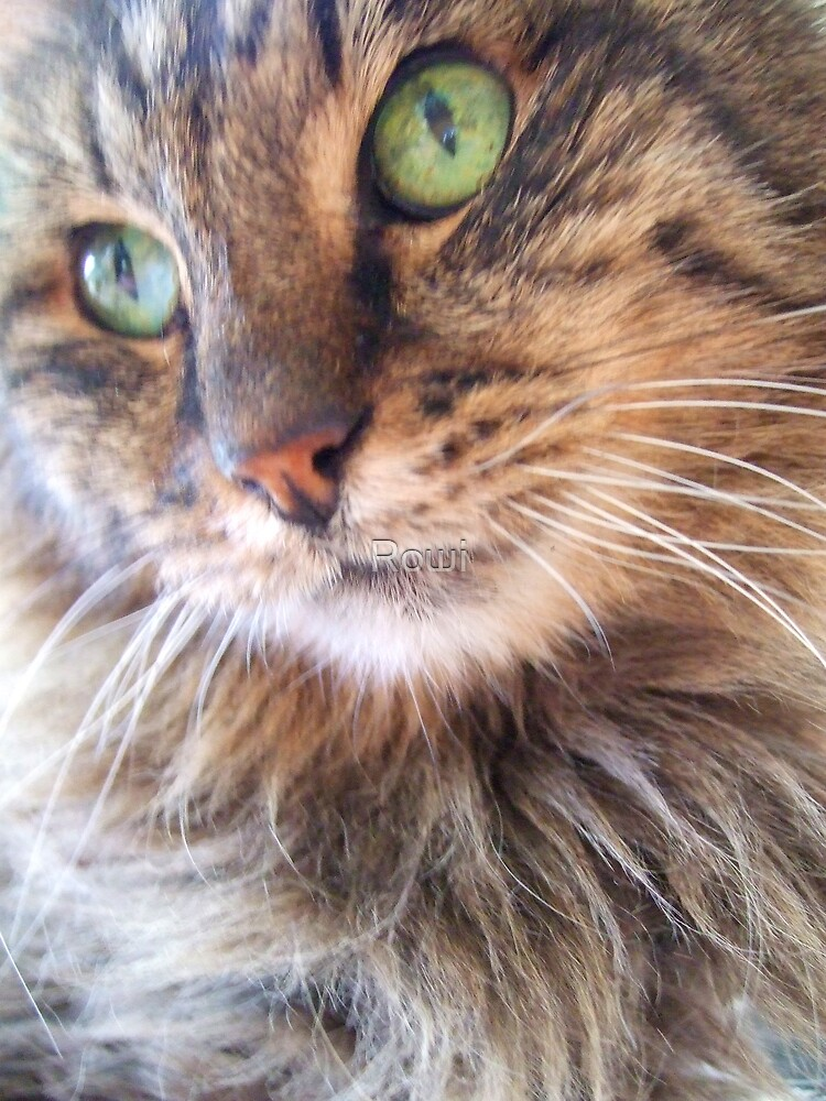 Old green eyes by Rowi