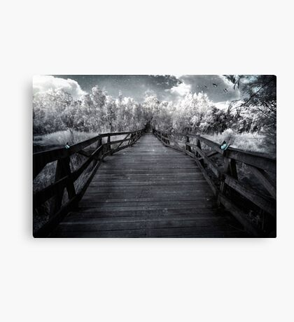 Butterfly Scene Canvas Print