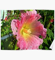 pink holly Poster