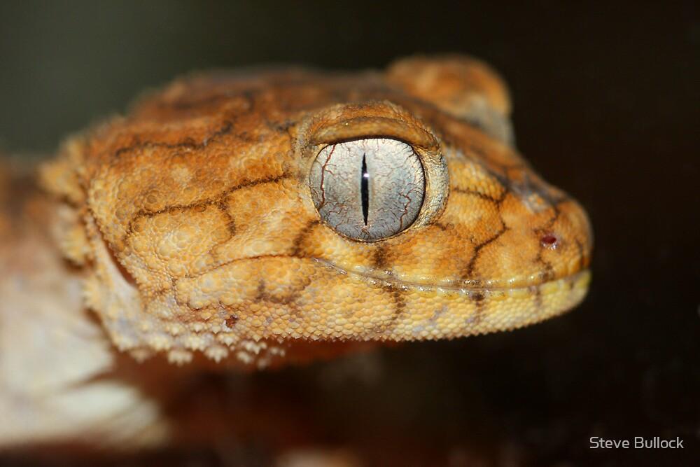 Rough Knob Tail Gecko by Steve Bullock