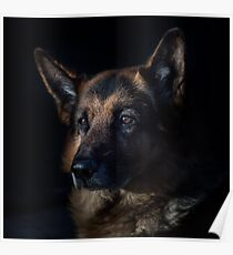 German Shepherd Pet  Poster