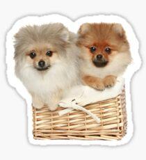 Puppies in a basket Sticker
